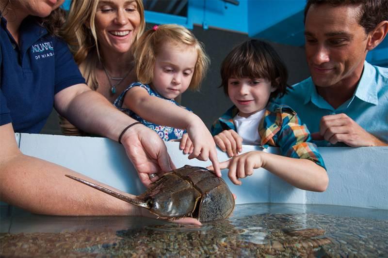 kids at aquarium in niagara falls
