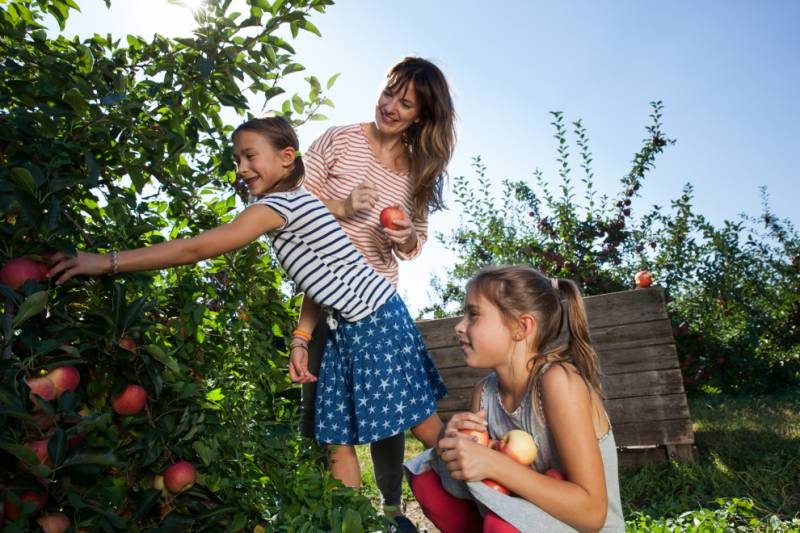 Mother and daughters picking apples during harvest season.