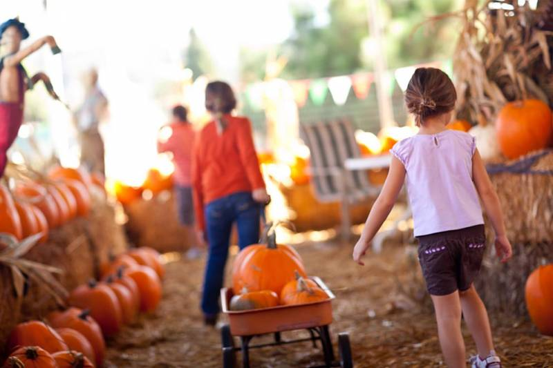 Girls picking out pumpkins at a pumpkin patch.