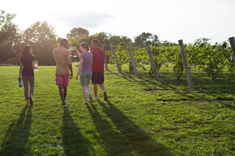 Friends enjoying wine in Niagara wine country vineyard.